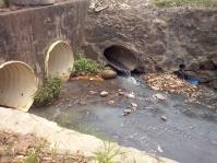 Além do mau cheiro, partes do Mané Falado estão tomadas por mato, lixo e folhas secas. [Foto: Brenda Carvalho]